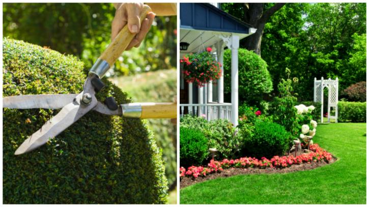 Footprints Landscaping Lawn Installation Maintenance Services Boston Ma