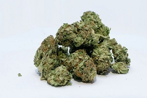 Image for Why and How to Use Weed Delivery Services with ID of: 4846715